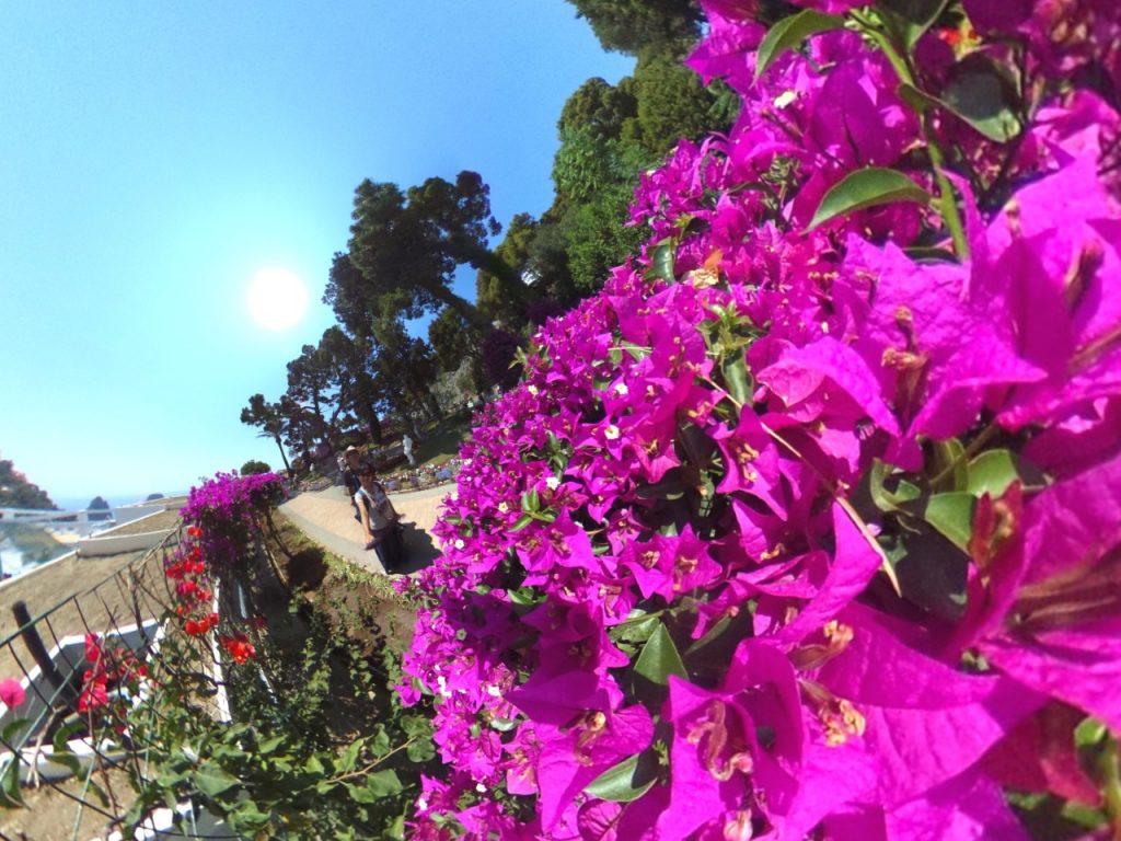 カプリ島 庭園