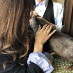 甘えん坊なカワウソにメロメロ!神戸のカワウソカフェ体験レポの画像