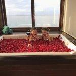 【体験談】憧れのバリ・アヤナリゾートで贅沢女子旅!の画像
